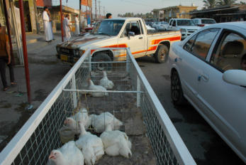 Retrieved photo.  Where one goes to buy chicken.